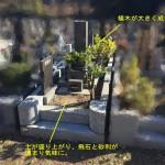 川崎市麻生区 早野聖地公園でお墓のリフォーム工事 植木の抜根・目地補修に化粧砂利の敷き込みなど。