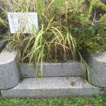 川崎市営霊園(早野聖地公園)に行ってきました。そこで…。