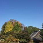 川崎市麻生区の寺院墓地でお墓の閉眼の立ち合いです。