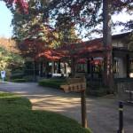 久しぶりに府中市の多磨霊園まで行ってきました。