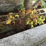 川崎市多摩区 お墓の要注意事例を確認!